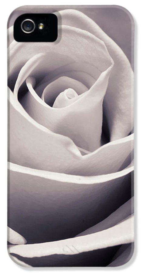3scape Photos IPhone 5 Case featuring the photograph Rose by Adam Romanowicz