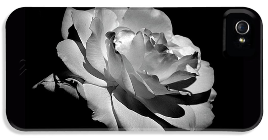 Rose IPhone 5 / 5s Case featuring the photograph Rose by Rona Black