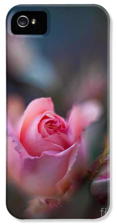 Rose IPhone 5 Case featuring the photograph Roses Scented Dream by Mike Reid