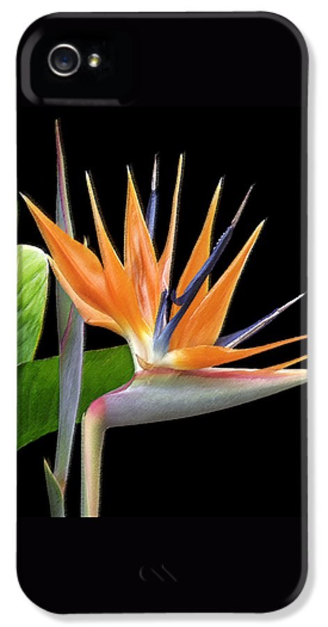 Tropical Flower IPhone 5 Case featuring the photograph Royal Beauty I - Bird Of Paradise by Ben and Raisa Gertsberg