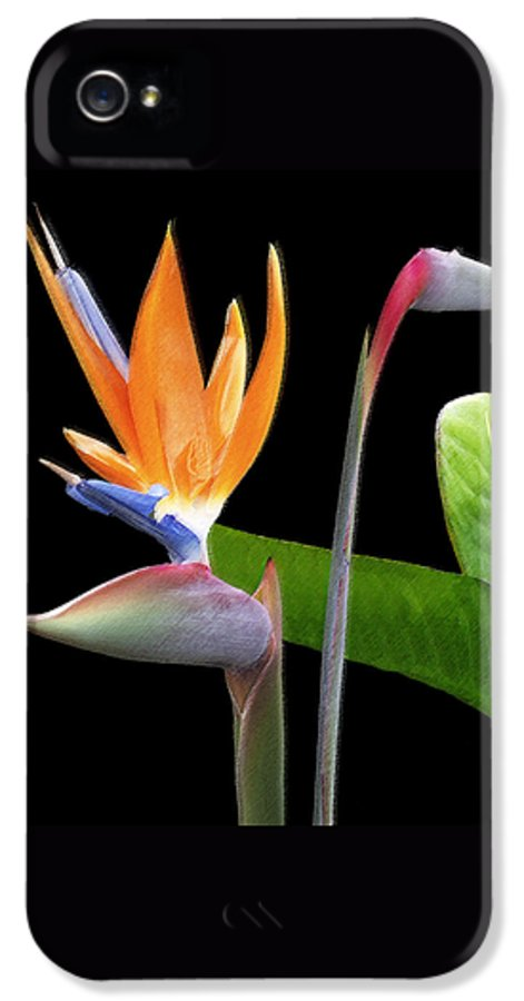 Bird Of Paradise IPhone 5 Case featuring the photograph Royal Beauty II - Bird Of Paradise by Ben and Raisa Gertsberg