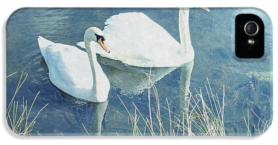 Swans IPhone 5 / 5s Case featuring the photograph Royal Birds by Sharon Lisa Clarke