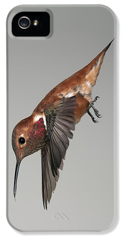 Bird IPhone 5 Case featuring the photograph Rufous Hummingbird - Phone Case Design by Gregory Scott