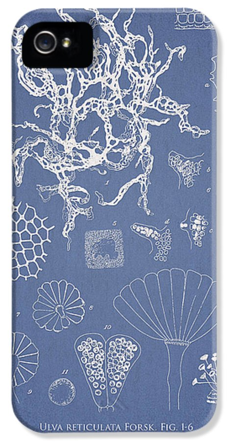 Algae IPhone 5 Case featuring the drawing Salwater Algae by Aged Pixel