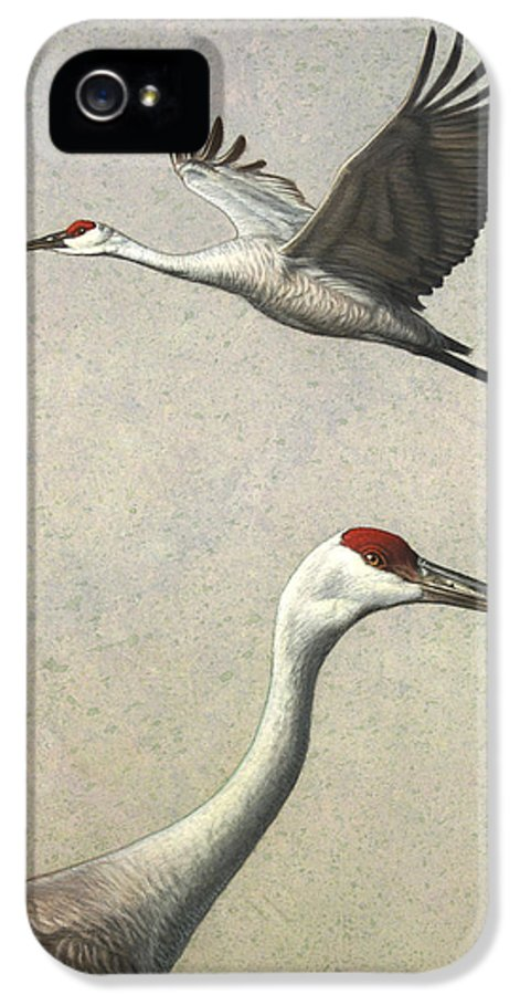 Crane IPhone 5 Case featuring the painting Sandhill Cranes by James W Johnson