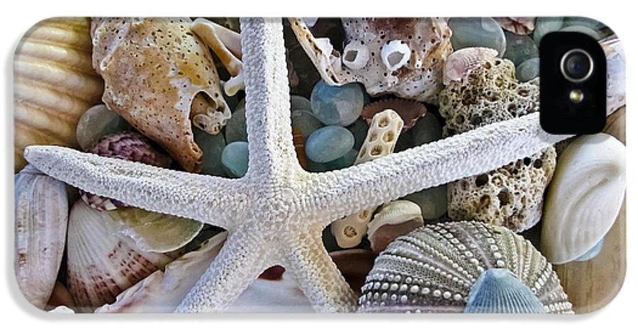 Seashells IPhone 5 Case featuring the photograph Sea Treasure by Colleen Kammerer