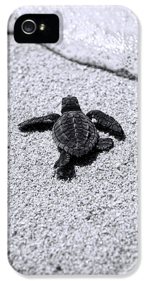 Baby Loggerhead IPhone 5 Case featuring the photograph Sea Turtle by Sebastian Musial