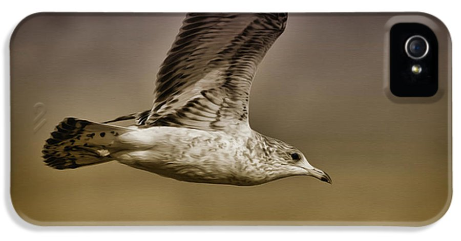 Seagull IPhone 5 Case featuring the photograph Seagull Oil by Deborah Benoit