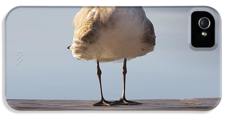 Seagull IPhone 5 Case featuring the photograph Seagull With An Attitude by Mike McGlothlen