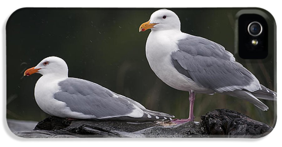 Seagull IPhone 5 Case featuring the photograph Seagulls by Gary Langley