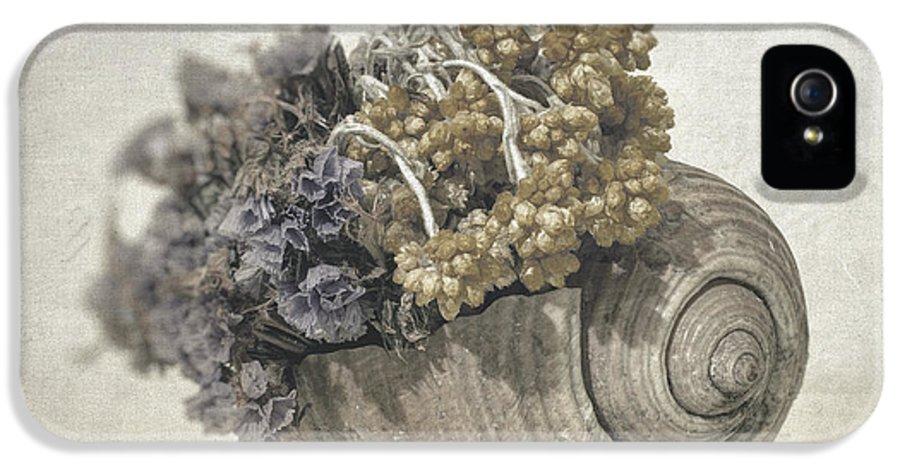 Seashell IPhone 5 / 5s Case featuring the photograph Seashell No.2 by Taylan Apukovska