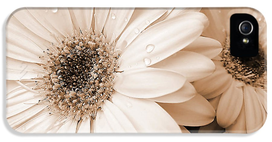 Daisy IPhone 5 Case featuring the photograph Sepia Gerber Daisy Flowers by Jennie Marie Schell