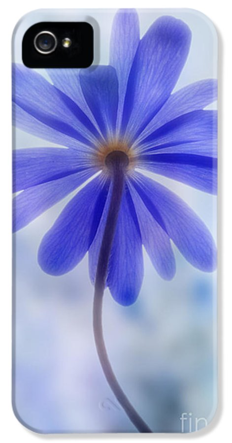 Anemone Blanda IPhone 5 Case featuring the photograph Shades Of Blue II by John Edwards