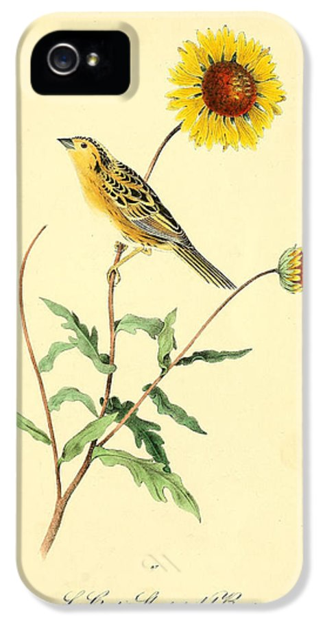 Audubon IPhone 5 Case featuring the painting Sharp-tailed Bunting by Philip Ralley