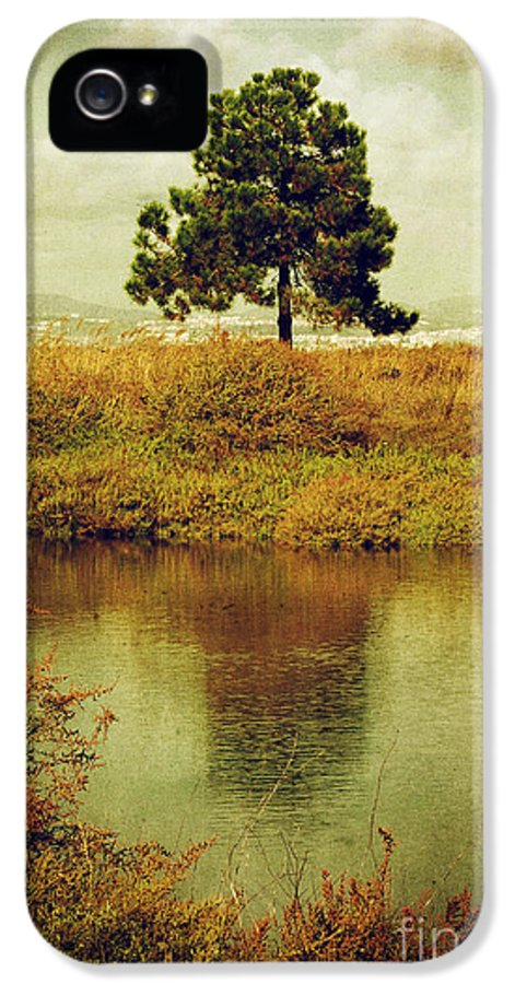 Mist IPhone 5 Case featuring the photograph Single Pine Tree by Carlos Caetano