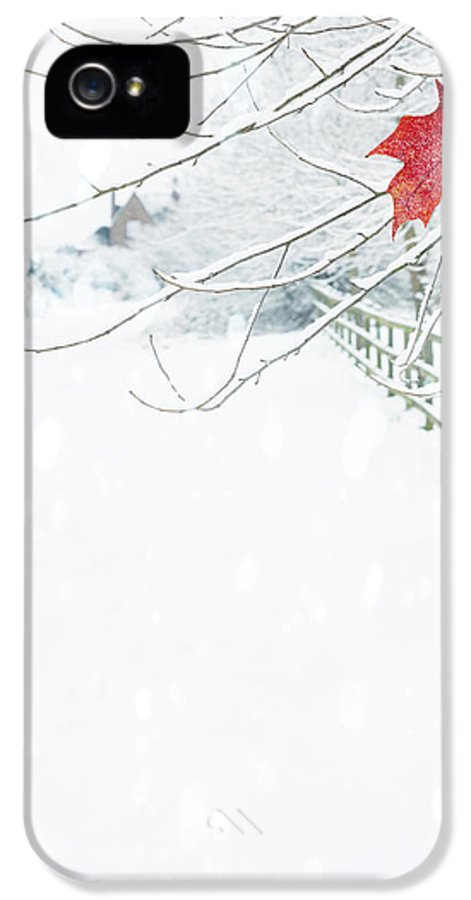Single IPhone 5 Case featuring the photograph Single Red Leaf by Amanda Elwell