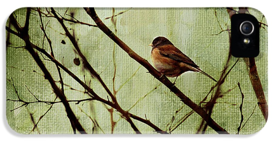 Bird IPhone 5 Case featuring the photograph Sittin' In A Tree by Rebecca Cozart