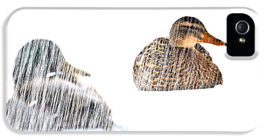 Duck IPhone 5 Case featuring the photograph Sitting Ducks In A Blizzard by Bob Orsillo