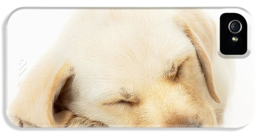Adorable IPhone 5 Case featuring the photograph Sleeping Labrador Puppy by Johan Swanepoel