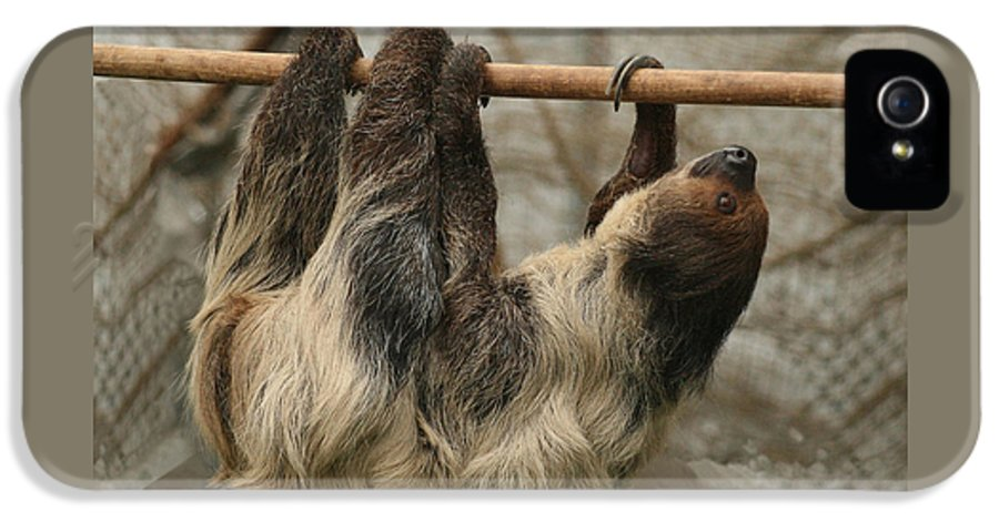 Sloth IPhone 5 Case featuring the photograph Sloth by Ellen Henneke
