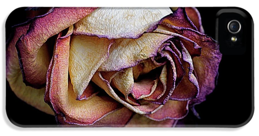 Dried Flower IPhone 5 / 5s Case featuring the photograph Slow Fade by Rona Black