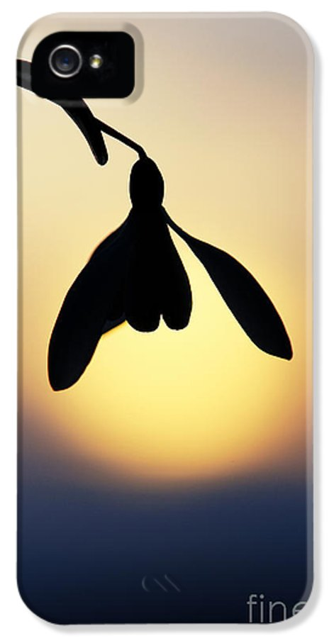 Snowdrop IPhone 5 Case featuring the photograph Snowdrop Silhouette by Tim Gainey