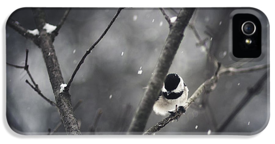 Chickadee IPhone 5 Case featuring the photograph Snowy Chickadee by Shane Holsclaw