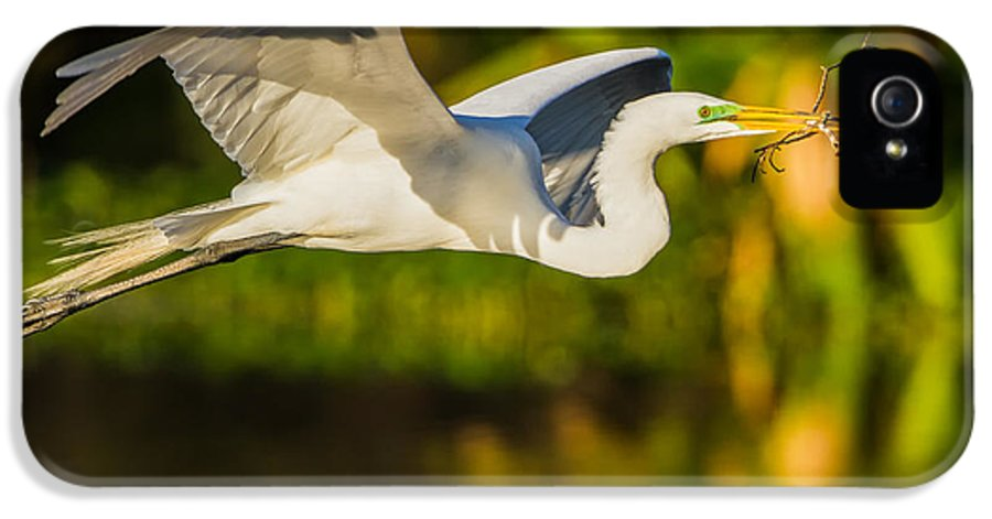 Wildlife IPhone 5 Case featuring the photograph Snowy Egret Flying With A Branch by Andres Leon
