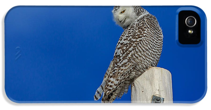 Snowy Owl IPhone 5 Case featuring the photograph Snowy Owl by Everet Regal