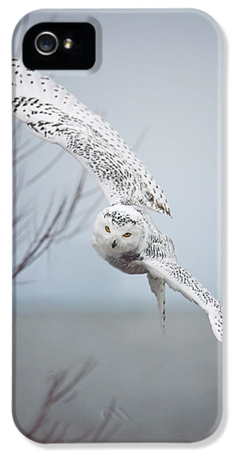 Wildlife IPhone 5 / 5s Case featuring the photograph Snowy Owl In Flight by Carrie Ann Grippo-Pike