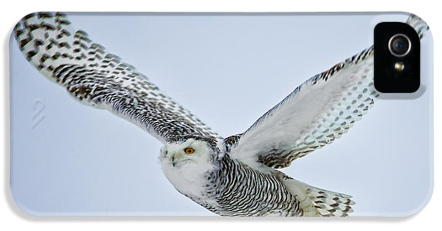 Snowy Owl IPhone 5 Case featuring the photograph Snowy Owl In Flight by Everet Regal