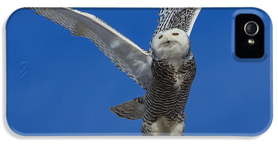 Snowy Owl IPhone 5 Case featuring the photograph Snowy Owl Taking Flight by Everet Regal