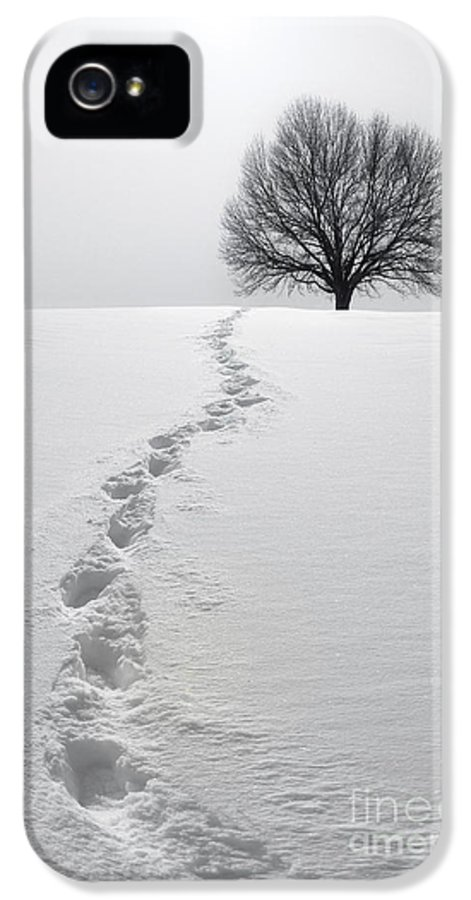 Tree IPhone 5 Case featuring the photograph Snowy Path by Diane Diederich