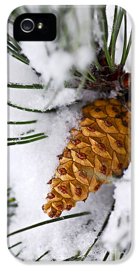 Winter IPhone 5 Case featuring the photograph Snowy Pine Cone by Elena Elisseeva
