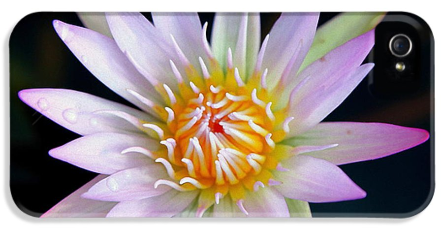 Water Lillies IPhone 5 Case featuring the photograph Soft Lullabye by Karen Wiles