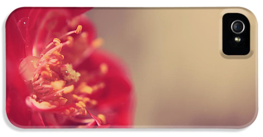 Rose IPhone 5 / 5s Case featuring the photograph Some Light Into Your Darkness by Laurie Search