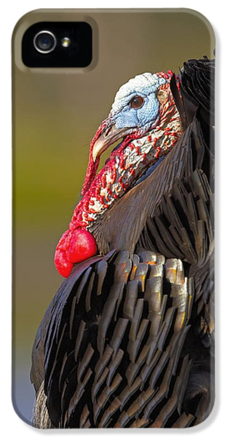 Eastern IPhone 5 Case featuring the photograph Someone's Son by Jack Milchanowski