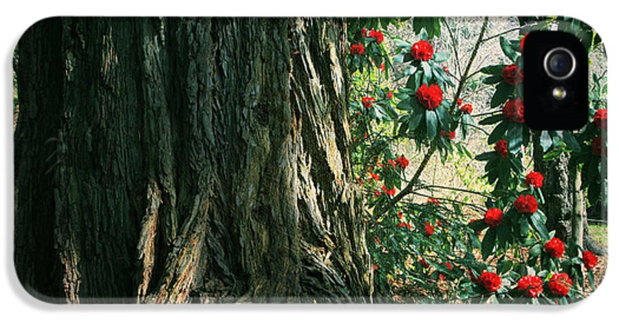 Uc Berkeley Botanical Garden IPhone 5 Case featuring the photograph Sometimes Life Is Sweet by Laurie Search