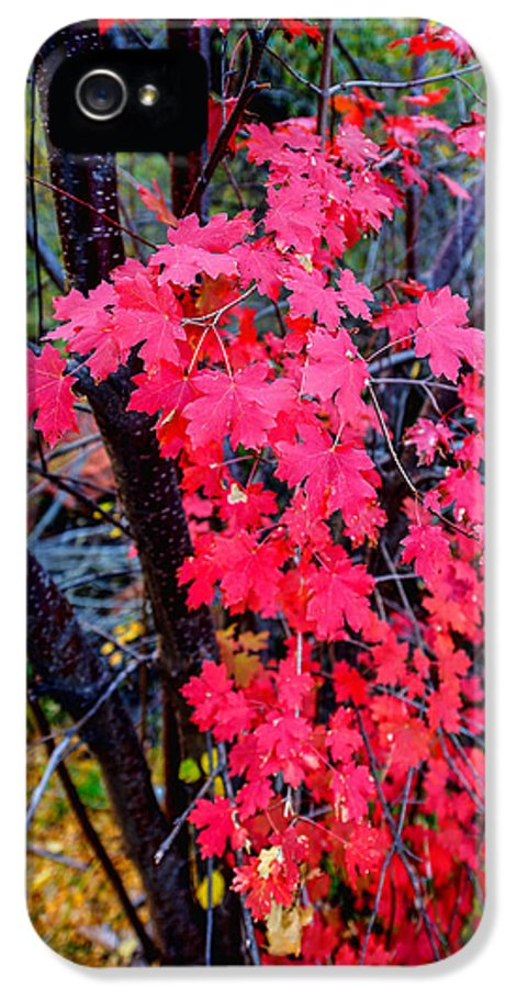 Fall IPhone 5 Case featuring the photograph Southern Fall by Chad Dutson