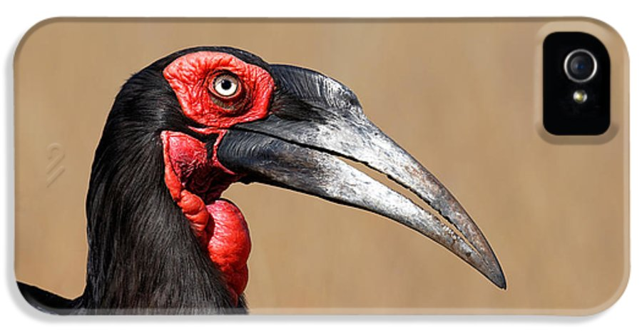 Southern IPhone 5 / 5s Case featuring the photograph Southern Ground Hornbill Portrait Side View by Johan Swanepoel