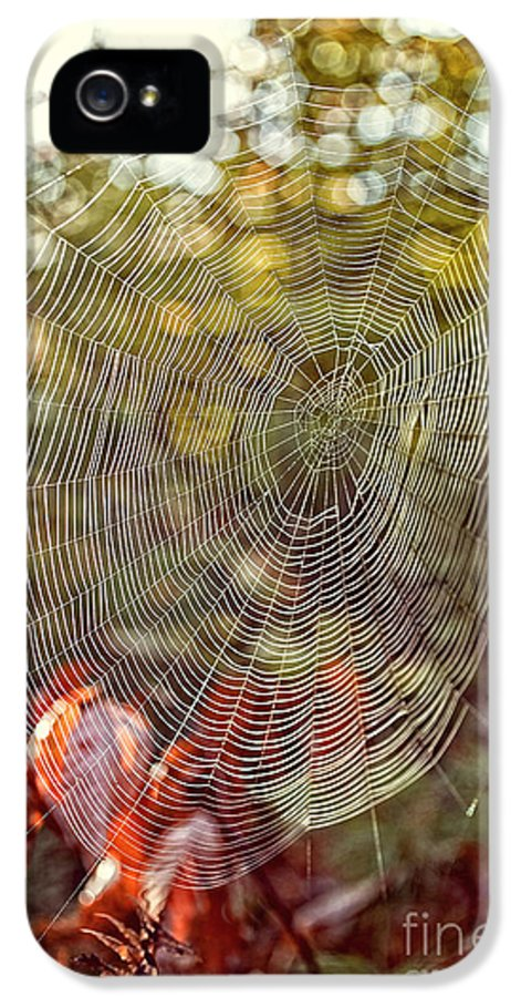 Background IPhone 5 Case featuring the photograph Spider Web by Edward Fielding