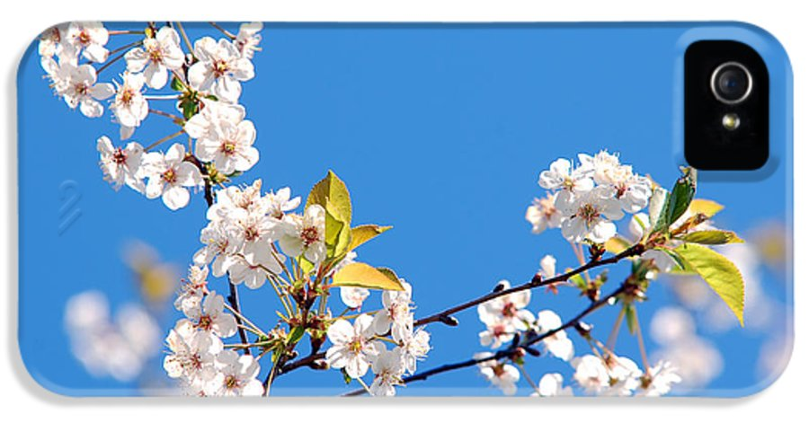 Background IPhone 5 Case featuring the photograph Spring Tree by Michal Bednarek