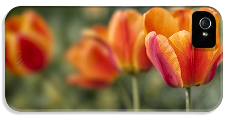 3scape Photos IPhone 5 Case featuring the photograph Spring Tulips by Adam Romanowicz