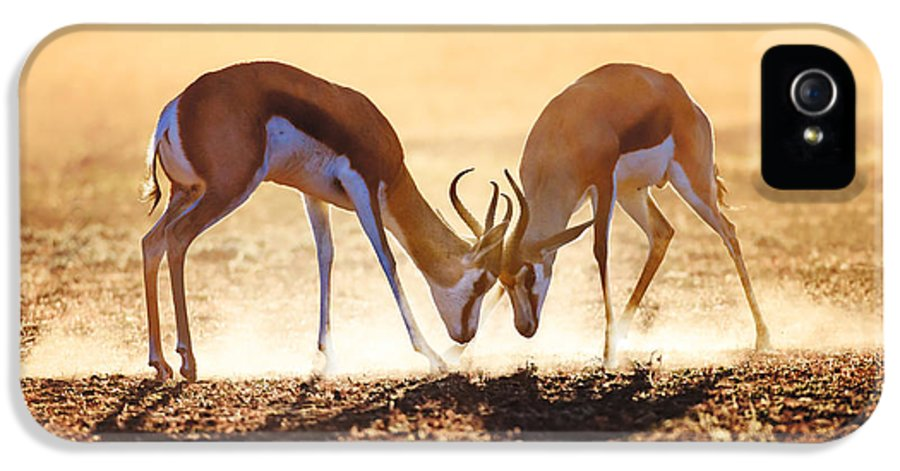 Springbok IPhone 5 Case featuring the photograph Springbok Dual In Dust by Johan Swanepoel