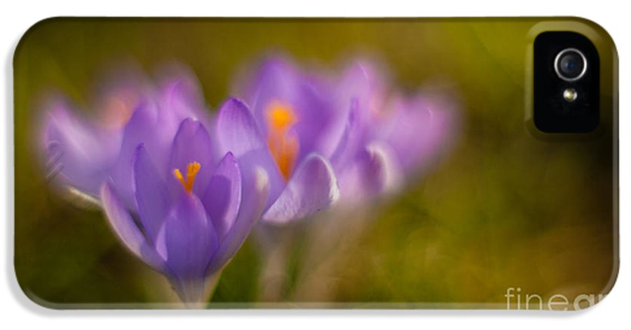 Crocus IPhone 5 Case featuring the photograph Springs Delicate Richness by Mike Reid