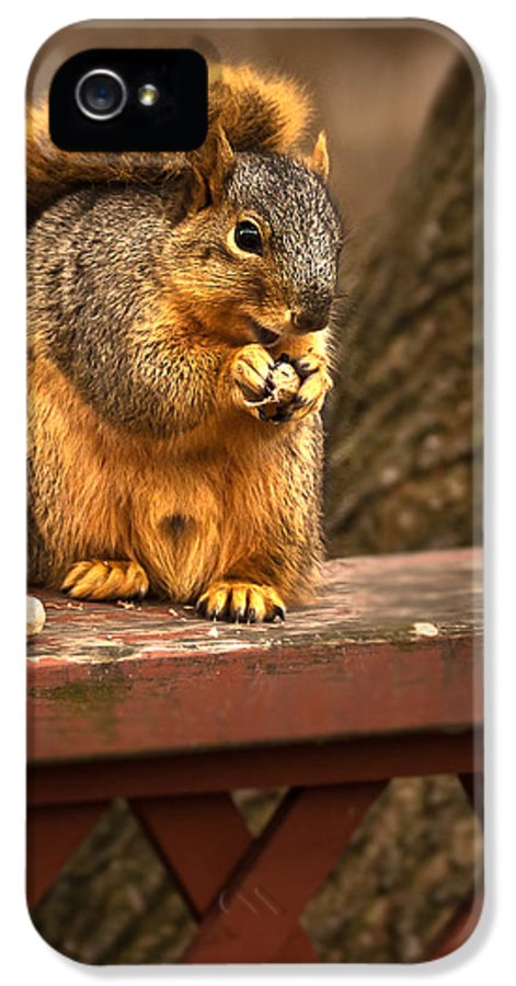 Eastern Fox Squirrel IPhone 5 Case featuring the photograph Squirrel Eating A Peanut by Onyonet Photo Studios