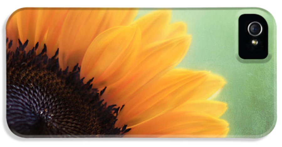 Sunflower IPhone 5 Case featuring the photograph Staring Into The Sun by Amy Tyler