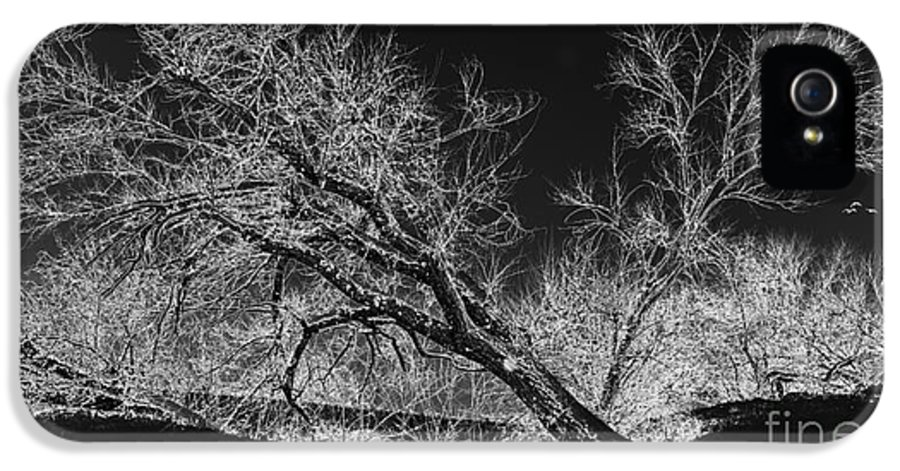 Snow IPhone 5 Case featuring the photograph Starkly by Betty LaRue