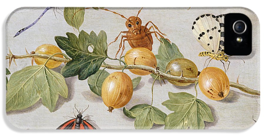 Gooseberry IPhone 5 / 5s Case featuring the painting Still Life Of Branch Of Gooseberries by Jan Van Kessel