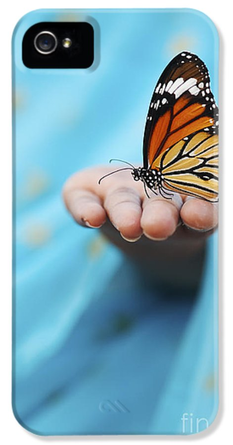 Indian Girl IPhone 5 Case featuring the photograph Striped Tiger Butterfly by Tim Gainey